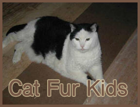 Cat_Fur_Kids_2