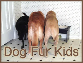 Dog_Fur_Kids_2